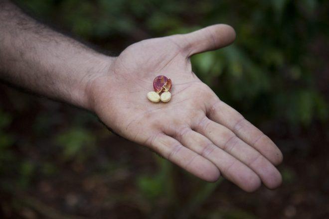 зерна на руке